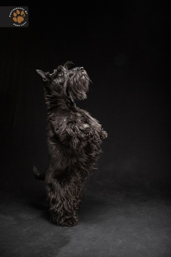 Stunning Photographs Showcase the Beauty of Black Dogs