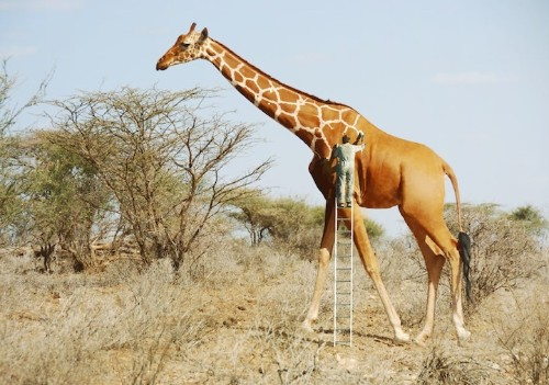 Whimsical Photo Manipulations Offer Lighthearted Perspectives on the Natural World