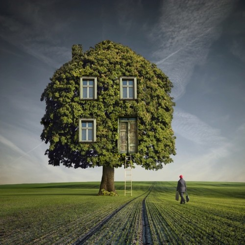 Pic of the Day: Surreal Tree House