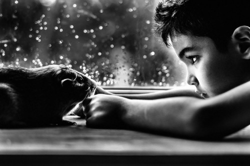 Photographer Mom Poginantly Documents the Incredible Bond Between Her Son and His Pets