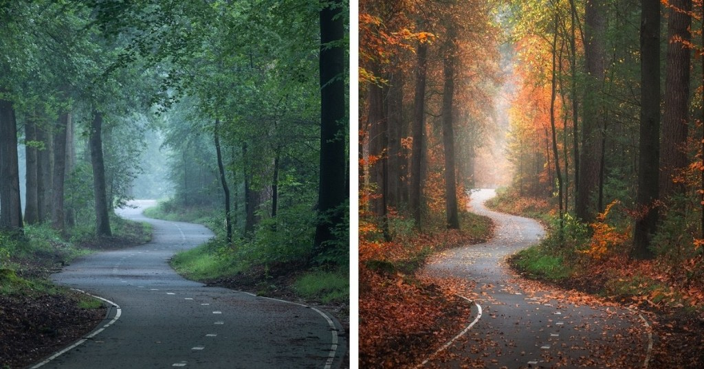 One Enchanting Forest Captured in Different Seasons Highlights the Beauty of Change