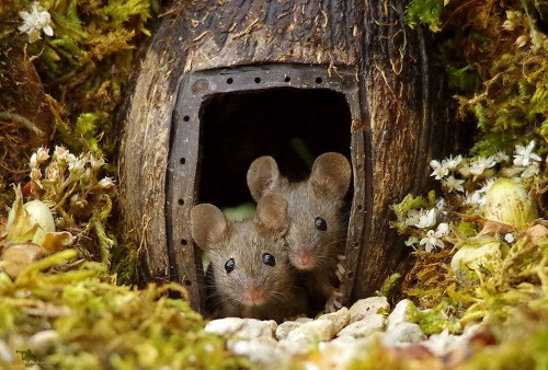 Man Builds Tiny Village for Adorable Family of Mice Found in His Garden