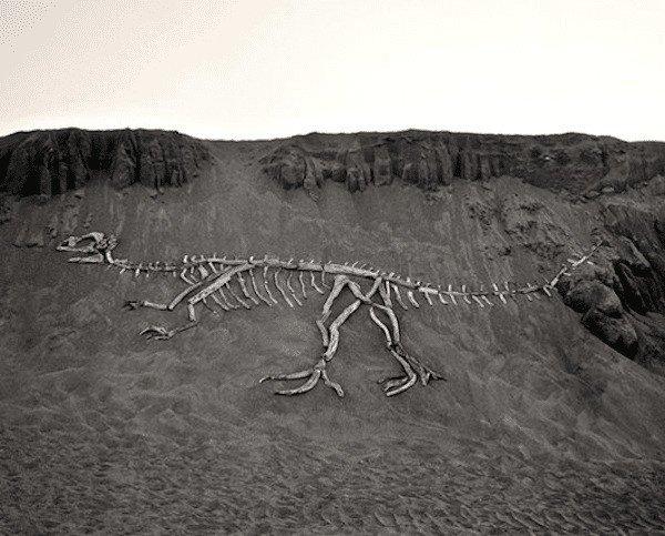 Dinosaur Fossils Built Into Landscapes with Driftwood
