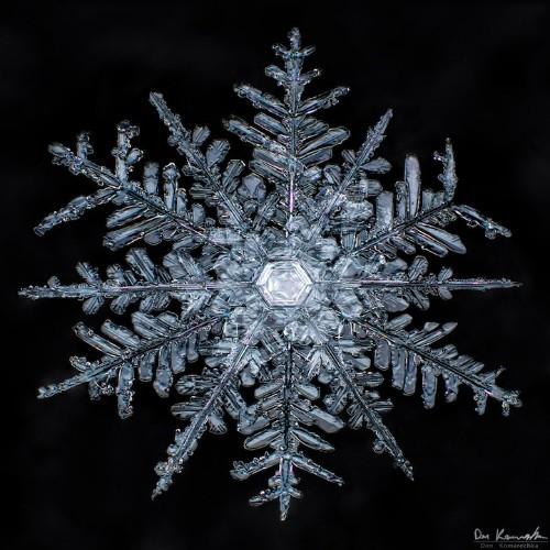 Crystal Clear Snowflake Photos by Don Komarechka