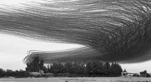 Photos Capture the Incredible Flight Paths Taken by Flocks of Birds