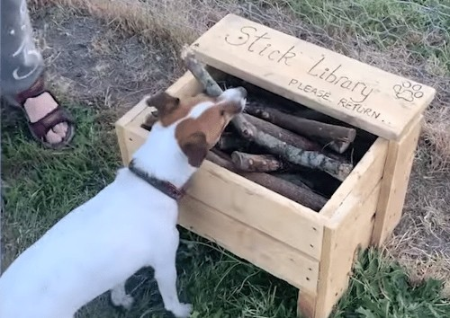 "Kind Man Crafts ""Stick Library"" for All Dogs at His Local Park"
