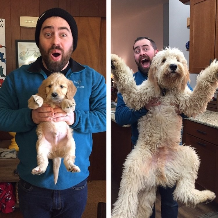 Then and Now Puppy Photos of Adorable Dogs Growing Up