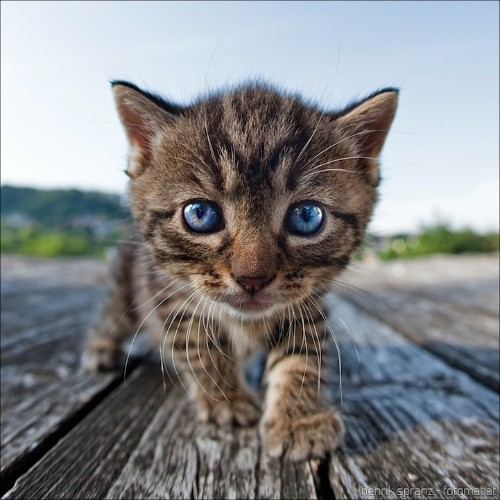 Adorable Kitten Photo Taken with a Fisheye Lens