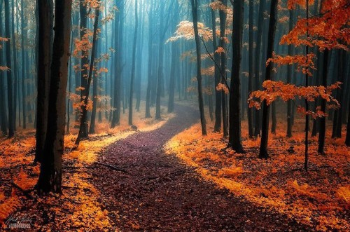 Enchanting Photos of Autumnal Forests by a Wandering Photographer