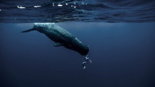 Champion Freediver Shows Incredible Oceans He Explores on Just One Breath of Air