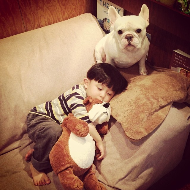 Adorable Naptime Adventures of a 3-Year-Old and His French Bulldog