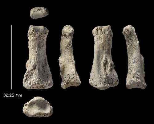 88,000-Year-Old Middle Finger Discovery Could Change Early Human History