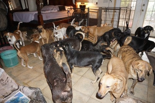 Woman Took 97 Dogs into Her Home to Protect From Hurricane Dorian