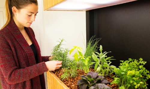Hi-Tech Indoor Garden Uses Aquaponics to Grow a Salad a Day