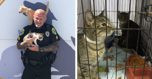 Police Lets People Pay Parking Tickets with Donations for Shelter Cats