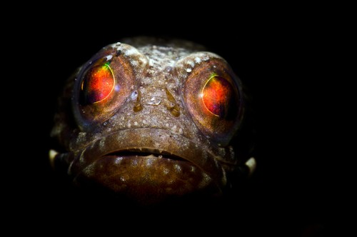 Incredibly Close Details of Creatures Below the Sea