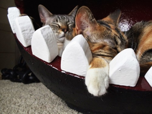 """Funny Cat Bed Mimics """"Chain Chomp"""" from Super Mario Bros."""