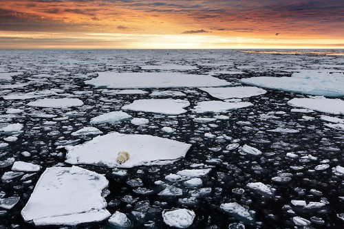 Powerful Photos of Stranded Polar Bears Surrounded by a Melting Sea of Ice