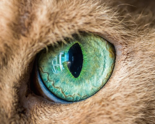 Mesmerizing Macro Photos of Cats' Eyes by Andrew Marttila