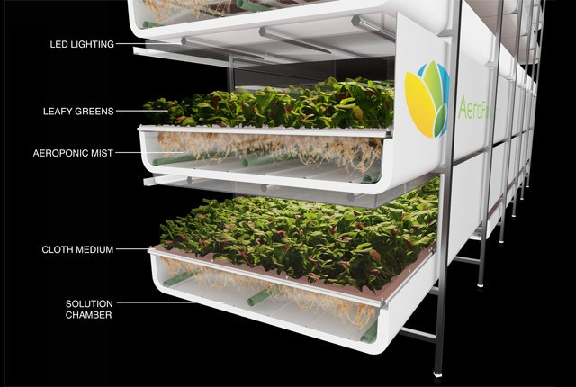 Converted Factory-Turned-Vertical Farm Will Grow 2 Million Pounds of Vegetables