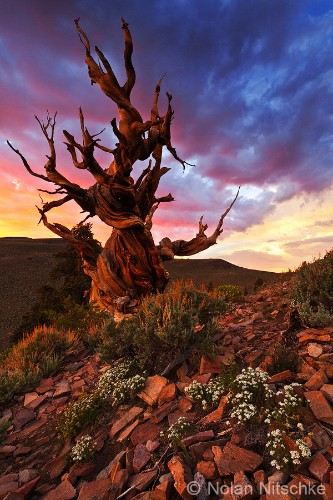 Awe-Inspiring Photos of Earth's Oldest Living Trees