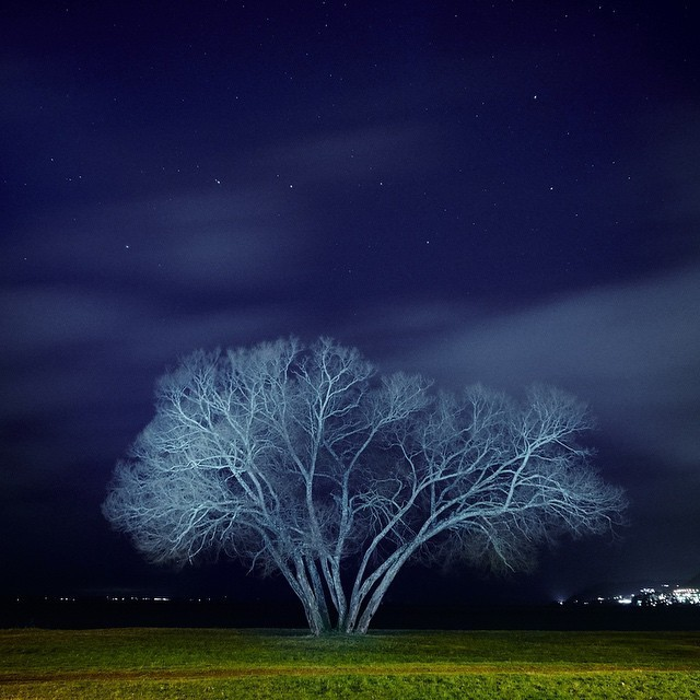 """Photographer Watches for Years as Stories Naturally Unfold around a Solitary """"Broccoli Tree"""""""