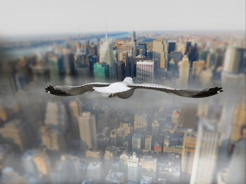 Soaring Above the World from a Bird's Perspective