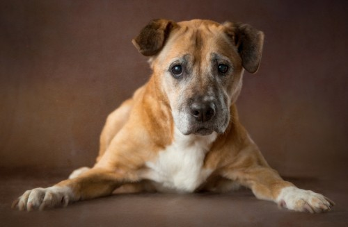 Beautiful Portraits of Old Shelter Dogs Who Have a Lot of Love Left to Give
