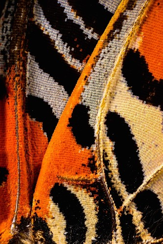 Striking Macro Photos Reveal Incredible Scale-Like Patterns of Butterfly Wings