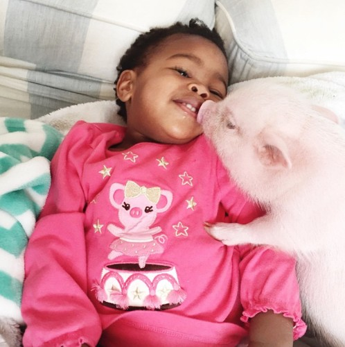 The Sweet Adventures of a 2-Year-Old Girl and Her Adorable Pet Pig