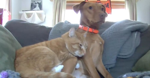 Pet Owner Sets Up Camera to Capture Cat & Dog Snuggling While Away
