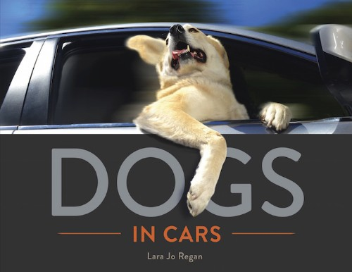 Endearingly-Goofy Portraits of Dogs Catching a Breeze from Cars