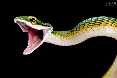 Man Spends 30 Years Photographing World's Most Dangerous Animals