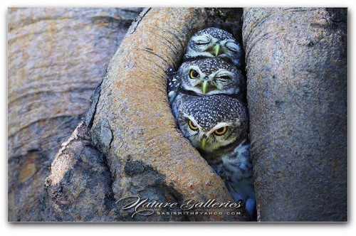 Photographer Captures the Mesmerizing Spirit of Adorably Wise Owls
