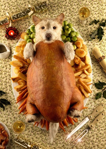 Photographer Transforms His Dog into Different Animals and Characters Every Christmas
