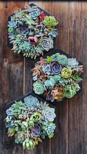 15 Hanging Succulent Planters to Turn Your Walls Into Vertical Gardens