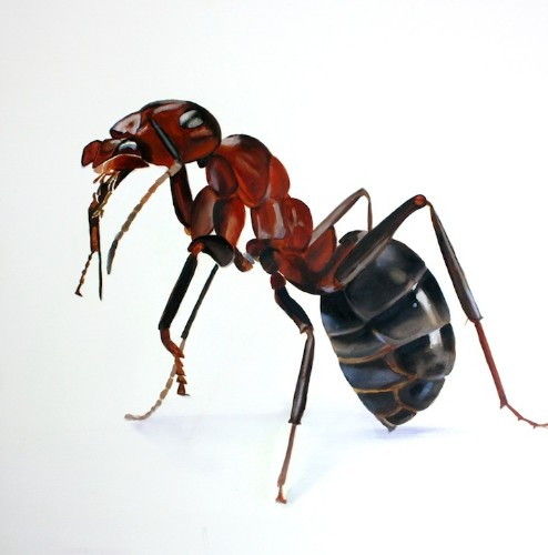 Extremely Detailed Large Scale Paintings of Bugs