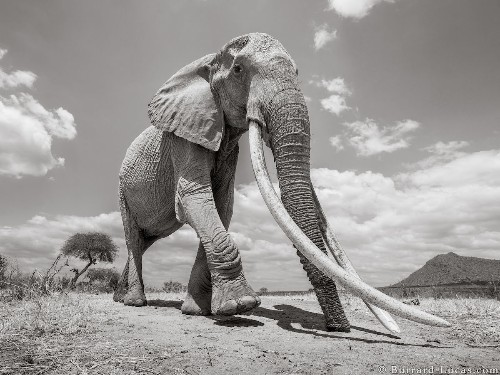 "Wildlife Photographer Captures the Last Photos of the ""Queen of Elephants"""