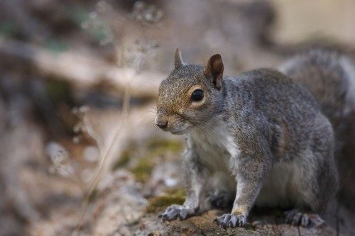 Study Shows Squirrels Eavesdrop on Birds to Understand If Danger Is Near