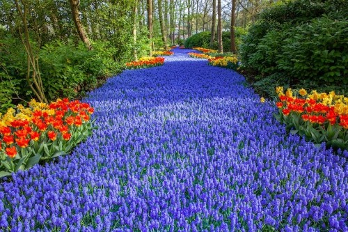 """Holland's Largest """"Flower Stream"""" Garden Bursts with 7 Million Colorful Blooms"""
