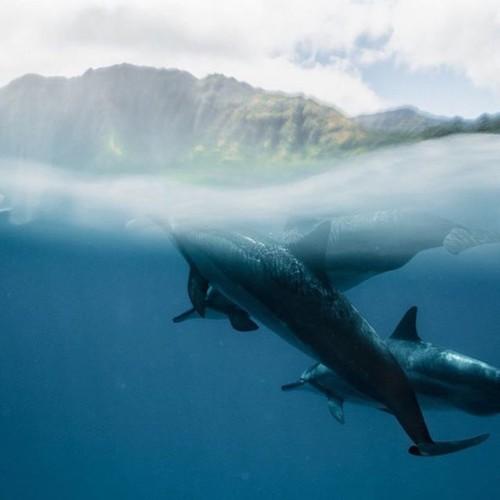 Interview: Underwater Photography Captures Dreamlike Moments Deep in the Ocean