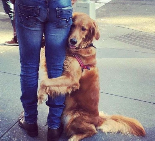 Adorable Dog Insists on Hugging Strangers During Her Daily Walks