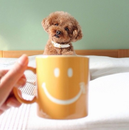"""Hilarious Instagram Portraits of Adorable Dogs """"Sitting"""" in Mugs"""