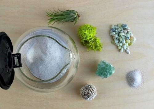 Creative DIY Project Turns Coffee Pot into Adorable Terrarium