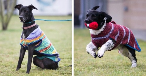 """""""Unadoptable"""" Dark Dogs are Given Bright Sweaters to Help Them Find Forever Homes"""