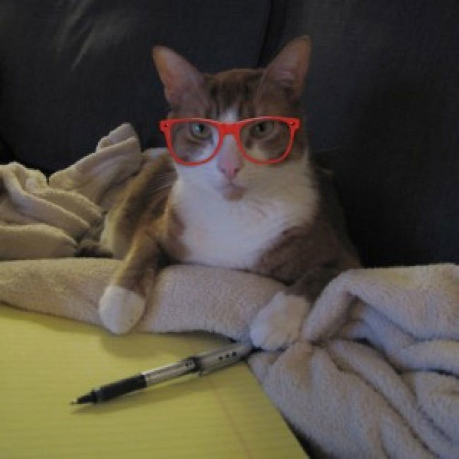 Adorable Cats Wearing Hipster Glasses