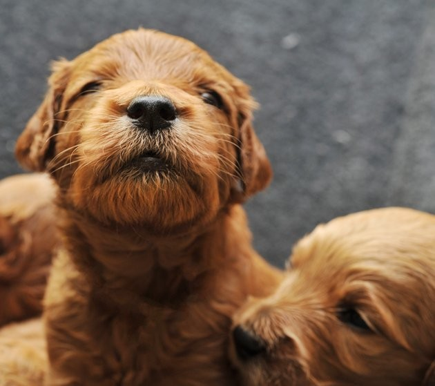 Adorable Newborn Puppies in Their First Three Weeks