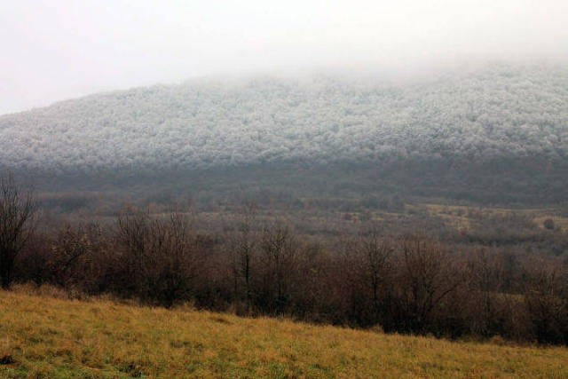 Freezing Fog Transforms Landscape into Icy Wonderland