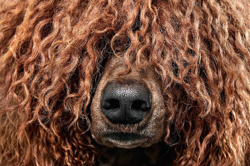 Up-Close Photos Capture the Diverse Textures and Patterns of Dogs Fur