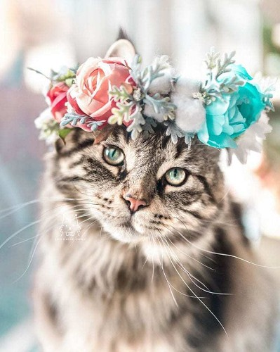 Interview: Artist Designs Custom Floral Crowns for Beautiful Pet Portraits
